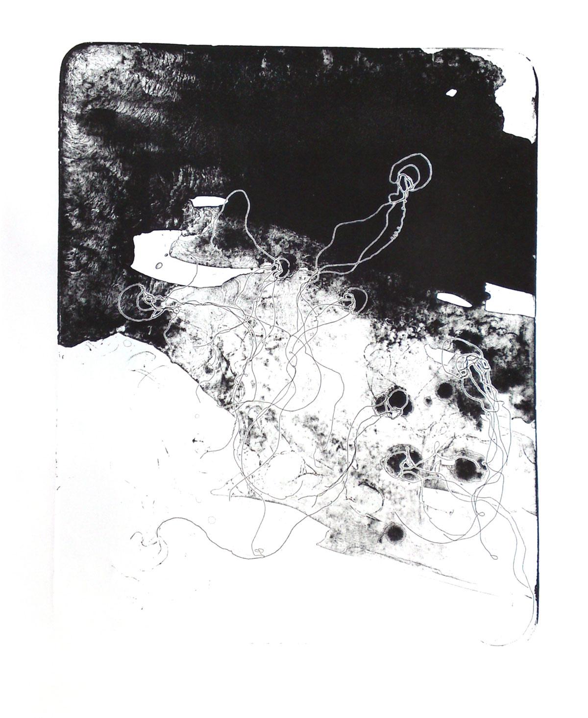 Schätzmüller: Cnidaria II