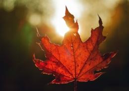 Der Herbst beginnt. Ein Beitrag über die Zeit in unserem Blog.
