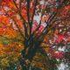Wege in den Herbst