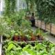 """Gärtnern in der Stadt – auch """"Urban Gardening"""" genannt – liegt im Trend."""