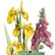 Eifeler Blüten-Lese. Ein Buch von Detlef Arens-vorgestellt im Blog der Thomas-Morus-Akademie Bensberg